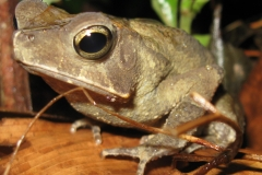 IMG_1736-Frog_resize