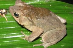 IMG_1744-Frog_resize